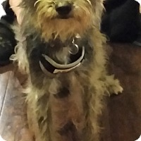 Adopt A Pet :: Jax - Lewisville, TX