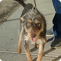 Terrier (Unknown Type, Medium) Mix Dog for adoption in Aurora, Colorado - Moses