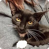 Adopt A Pet :: Coconut - Long Beach, NY
