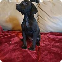 Adopt A Pet :: Annie - Tomah, WI