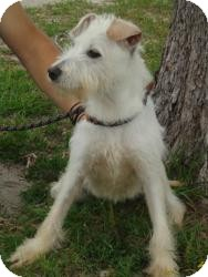Terrier (Unknown Type, Medium) Mix Dog for adoption in Crawfordville, Florida - Beacon