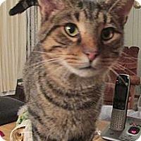 Adopt A Pet :: Gypsy - Acme, PA