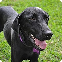 Adopt A Pet :: Raven - Richmond, VA