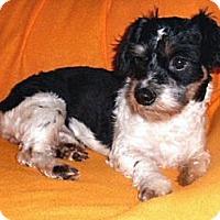 Adopt A Pet :: Al - Mooy, AL