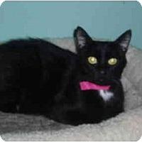 Adopt A Pet :: Ruby Diamond - Hamburg, NY