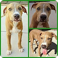 Adopt A Pet :: Tremble - Scottsdale, AZ