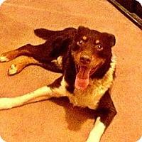 Adopt A Pet :: Julian - Winchester, CA