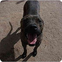 Adopt A Pet :: Romo - Gilbert, AZ