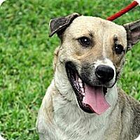 Adopt A Pet :: Hummer - Houston, TX