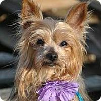 Adopt A Pet :: April Ann - Austin, TX