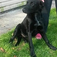 Adopt A Pet :: pout - Prestonsburg, KY