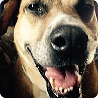 Shepherd (Unknown Type) Mix Dog for adoption in Birmingham, Michigan - MABEL