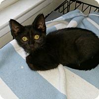 Adopt A Pet :: Oni - Mission Viejo, CA