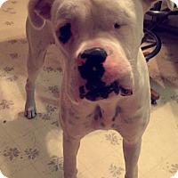 Adopt A Pet :: Stax - Larned, KS