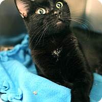 Adopt A Pet :: CoCo *Petsmart GB* - Appleton, WI