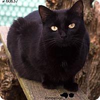 Adopt A Pet :: Salem - Baton Rouge, LA