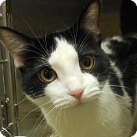 Adopt A Pet :: Rafa - Wickenburg, AZ