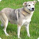 Adopt A Pet :: NATASHA