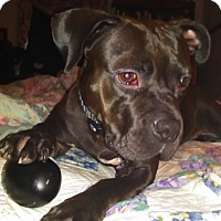 Adopt A Pet :: Emma Grace - Columbia, MD