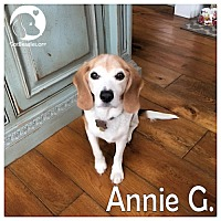 Adopt A Pet :: Annie G - Pittsburgh, PA