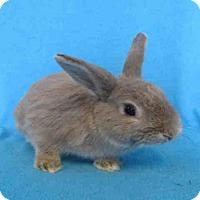 Adopt A Pet :: BENJAMIN - Toronto, ON