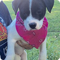 Adopt A Pet :: Carey - Trenton, NJ