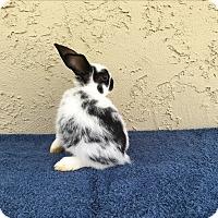 Adopt A Pet :: Frankie - Bonita, CA