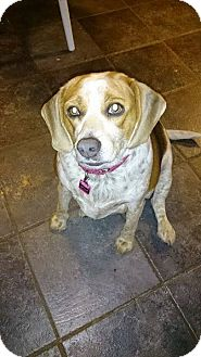 Beagle Mix Dog for adoption in cicero, New York - Bella