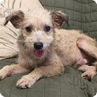 Terrier (Unknown Type, Medium) Mix Dog for adoption in Livingston, Texas - Max