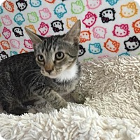 Adopt A Pet :: POLLY - Fountain Hills, AZ