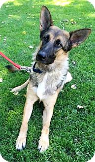 German Shepherd Dog Mix Dog for adoption in Green Bay, Wisconsin - Athena