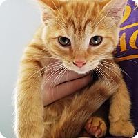 Adopt A Pet :: Jack-o-Lantern - Kalamazoo, MI