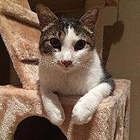 Adopt A Pet :: Hugo - St. Louis, MO