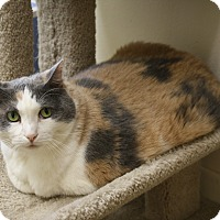 Calico Cat for adoption in North Hollywood, California - Daisy Doo
