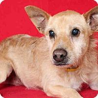 Adopt A Pet :: Sandie - Lomita, CA
