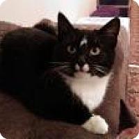Adopt A Pet :: Sourdough - Worcester, MA
