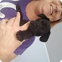 Adopt A Pet :: Deanie - Los Angeles, CA