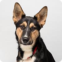 Adopt A Pet :: Josh - Westfield, NY