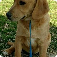 Adopt A Pet :: Twirl - Allentown, PA