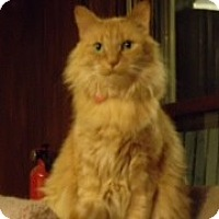Adopt A Pet :: Farrah - Byron Center, MI