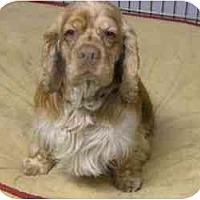 Adopt A Pet :: Timmy - Tacoma, WA