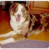 Adopt A Pet :: Kodi - Orlando, FL
