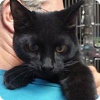 Adopt A Pet :: Sheen - St. Petersburg, FL