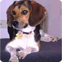 Adopt A Pet :: Willow Anne - Novi, MI