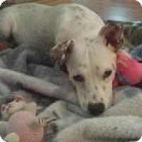 Adopt A Pet :: Sunshine - Marlton, NJ