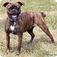 Adopt A Pet :: Dolly - Bedford, VA