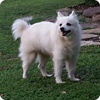 Adopt A Pet :: Wynston of Tampa FL - Bradenton, FL