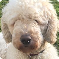 Adopt A Pet :: Wall NJ - Sparky - New Jersey, NJ