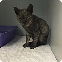 Adopt A Pet :: Mozart - North Brunswick, NJ