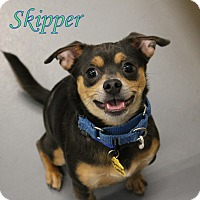 Adopt A Pet :: Skipper - Winter Haven, FL